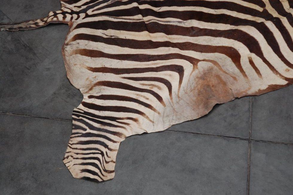 Decorative original zebra skin carpet 1960s